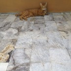 6x12 Silver Tumbled Travertine Pavers