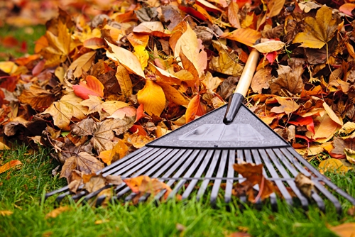 There are many things to take care of in your yard before winter!
